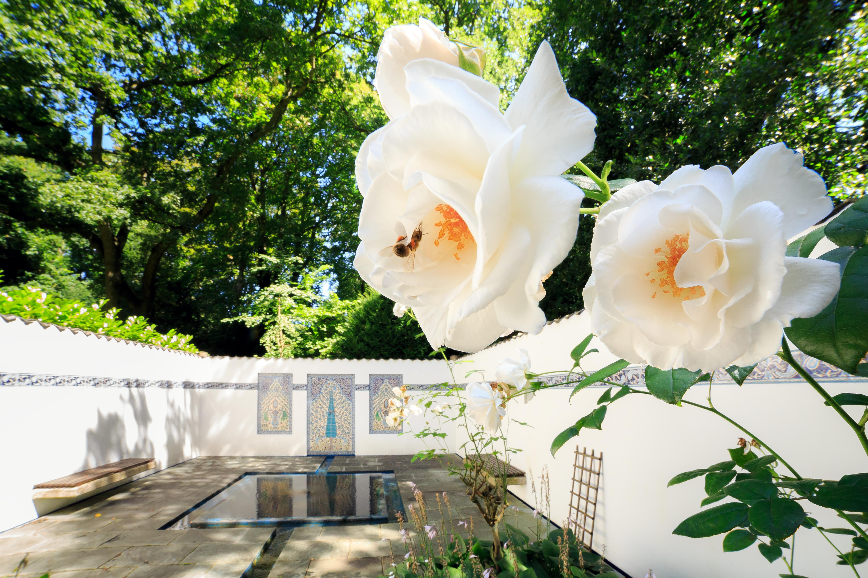 persian rose garden